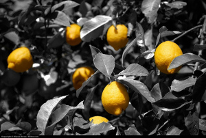 Lemon Tree by Moyan Brenn, Flickr.com